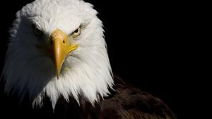 Asas da imaginação! Polícia da Holanda treina águias para capturar drones 10