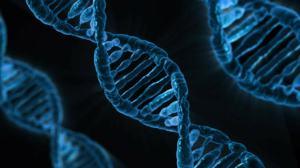 Fita de DNA