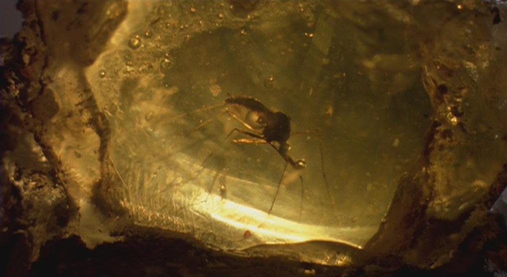 Em Jurassic Park, DNA no sangue sugado por mosquitos fez com que fosse possível recriar dinossauros