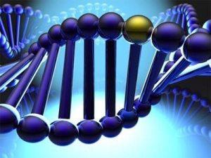 DRD4 300x225 - Ciência: promiscuidade e infidelidade estão no DNA
