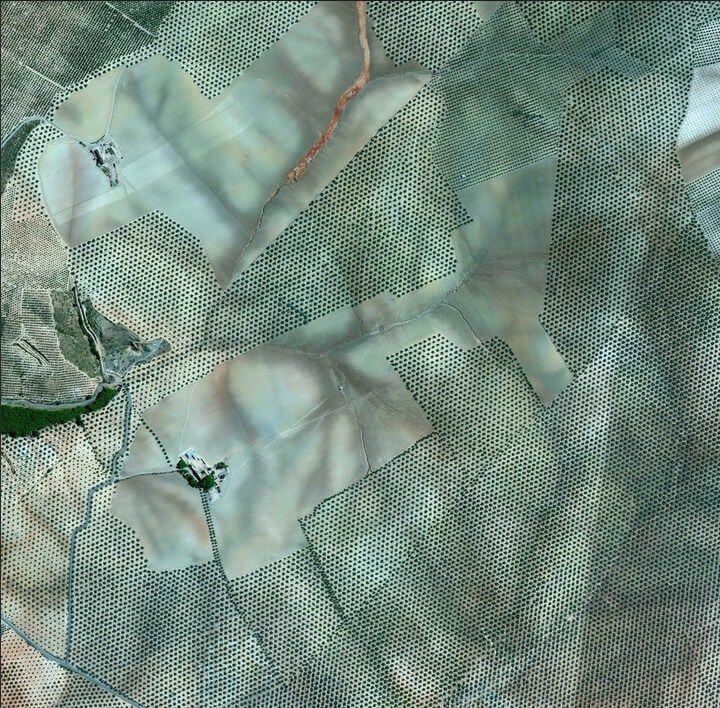 As plantações de oliveiras, Córdoba, Espanha, 19 de julho de 2015. (Daily Overview)