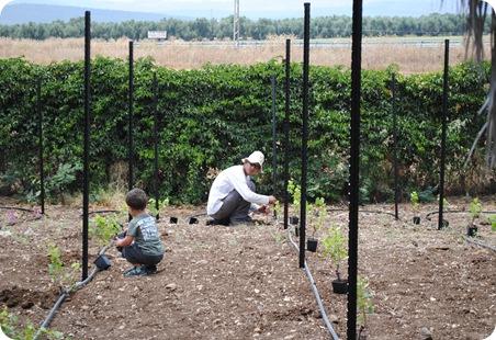 cs planting 082