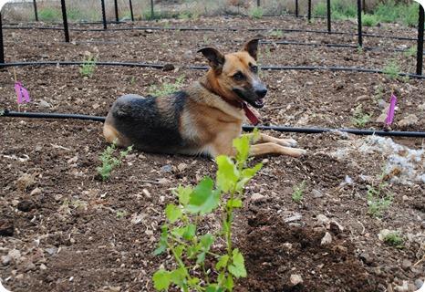 cs planting 072