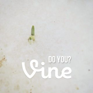 vine . are you on the bandwagon?