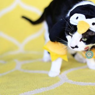 Rosco Dressed as a Penguin (Oh, and a Halloween Photo Contest!)