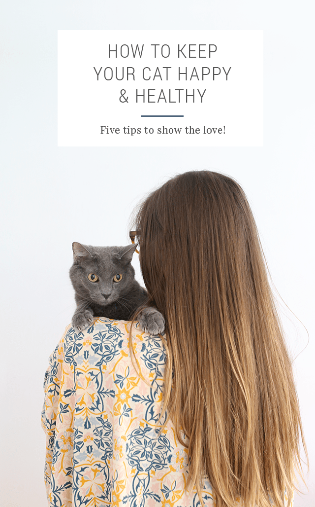 5 Tips - How to Keep Your Cat Healthy