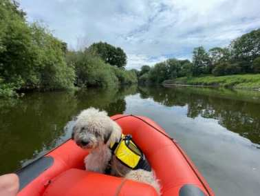 Mini raft hire for dogs