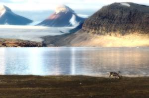 Svalbard Arctic Landscape