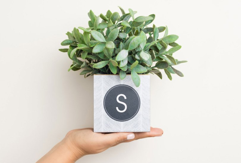 monogrammed planter