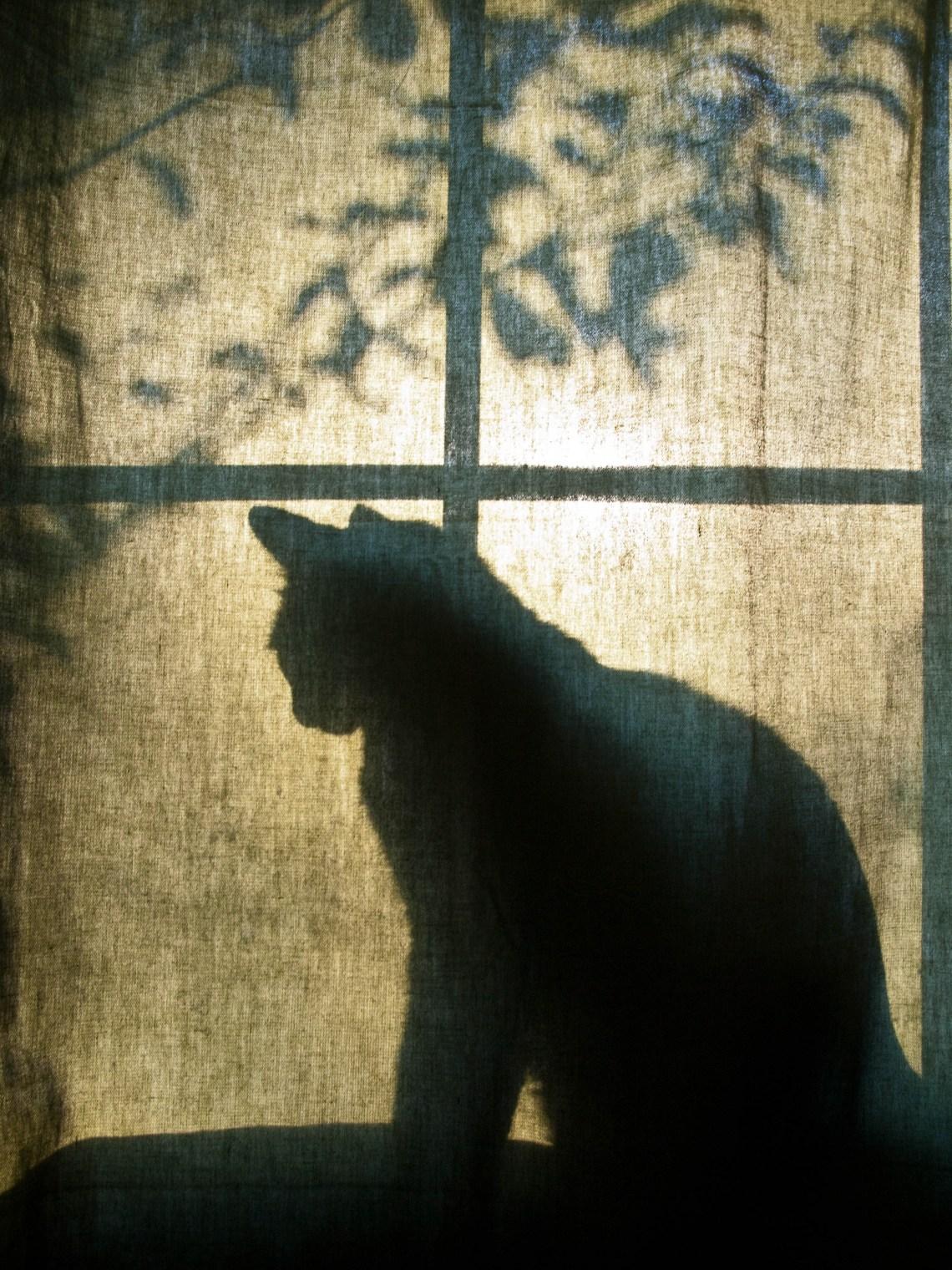 Cat on a Window Ledge at Sunrise