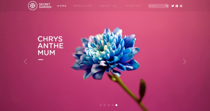 Best Stock Photos for Websites — 25 Top Website-Ready Images — Dramatic Flower Images