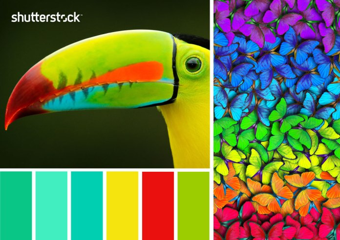 Tropical Palette