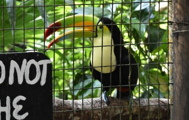 Book a Ride to the Belize Zoo