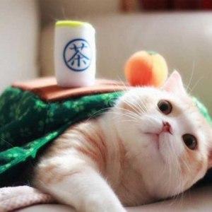 Kotatsu Cat Blanket