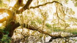 Beautiful and Hidden - Low Country, SC - Shot on Film