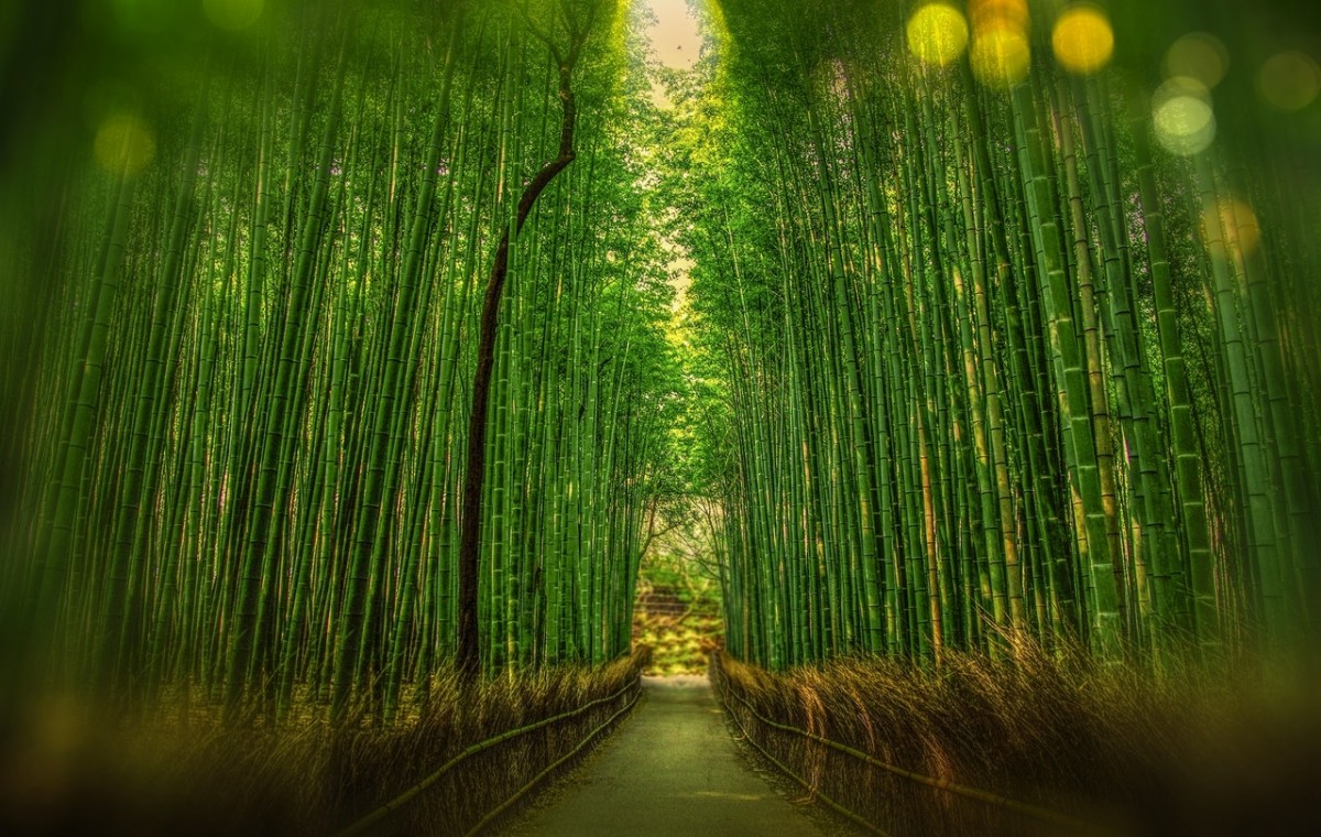 Bamboo Forest how to compose it