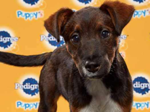 Watch Puppy Bowl 2020 Online Free - Puppy And Pets