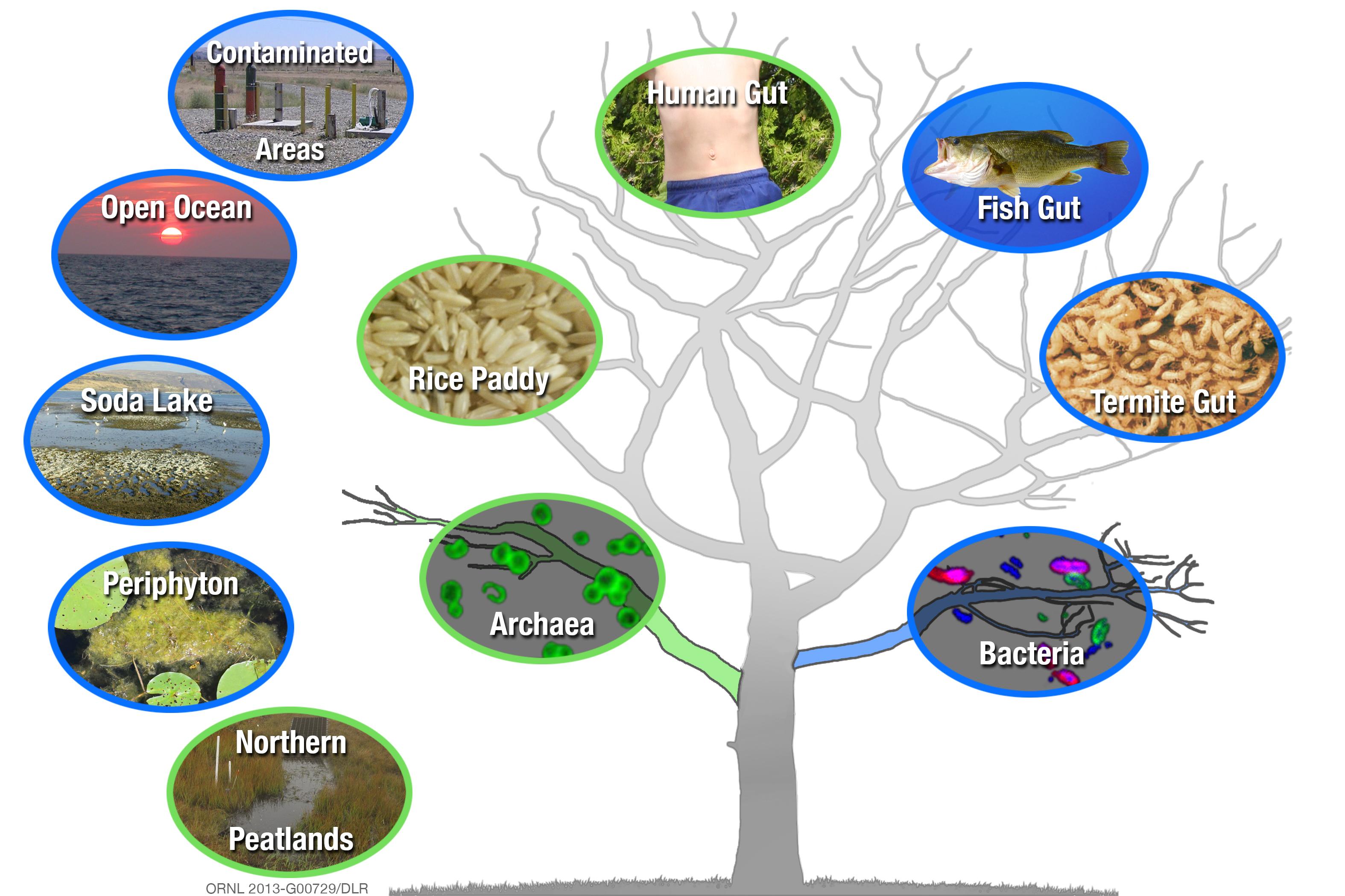 Toxic Methylmercury Producing Microbes More Widespread