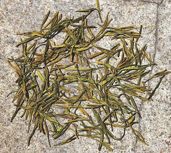 Pale yellowish green dry Anji Bai Cha Green Tea leaves