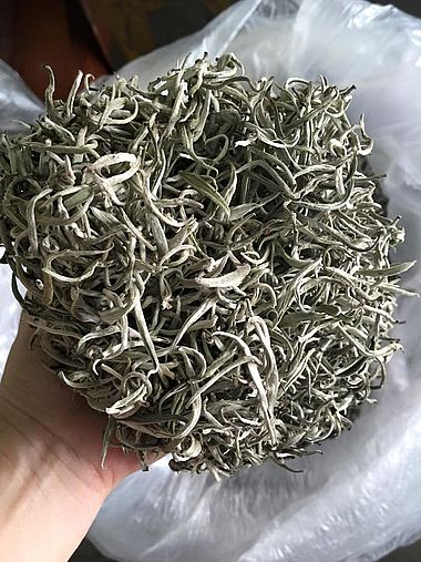 """Ancient Snow Shan White Silver Needle Tea from ancient """"Thuyet Shan"""" tea trees in Ha Giang province, Vietnam"""
