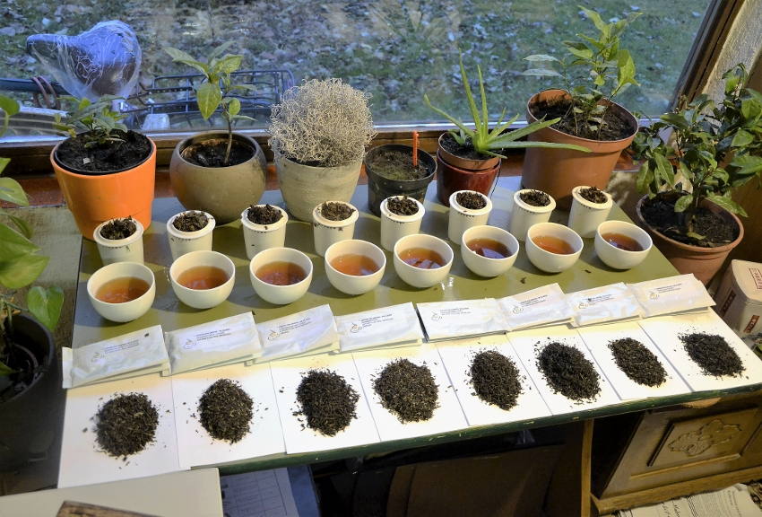 2016 Darjeeling and Assam Autumnals degustation - 8 estates