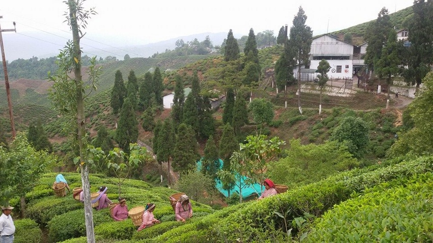 Margaret's Hope Tea Garden