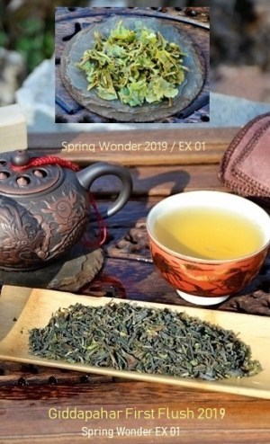Giddapahar First Flush 2019 Spring Wonder EX 01 - first spring picking 2019 of Giddapahar tea garden in Darjeeling