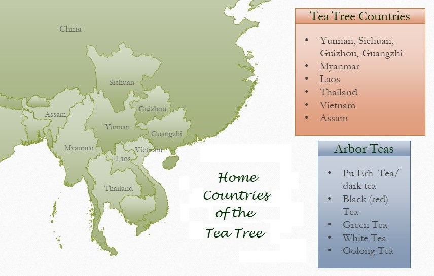Home countries of the ancient tea tree