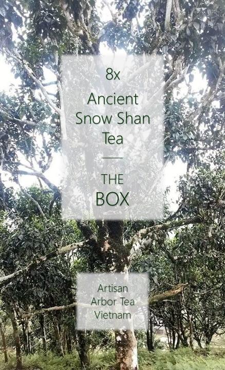 Ancient Snow Shan Box : 8 x Tuyet Shan / Ancient Snow Shan Tea, artisan arbor teas from Ha Giang province, north Vietnam