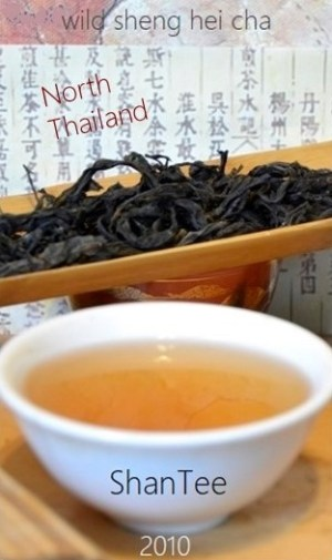 "ShanTea - Wild Sheng Hei Cha (= raw ""Pu Ehr"" Tea) from the border region north Thailand / Myanmar"