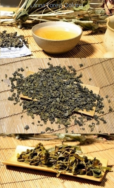 Lanna Oolong - Forest-friendly Oolong Tea from large-leave assamica varieties in northern Thailand