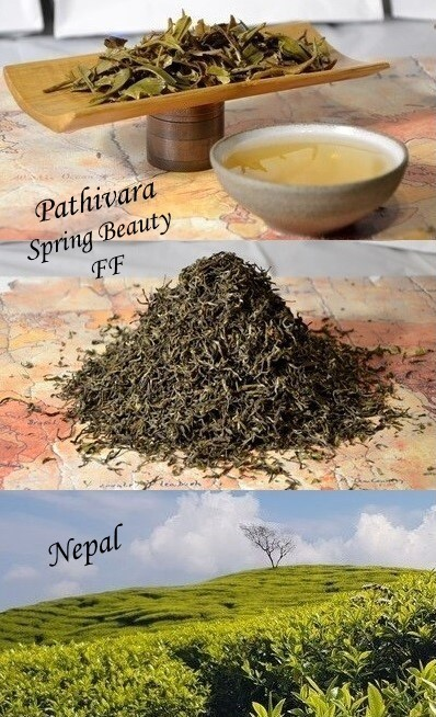Pathivara Spring Beauty First Flush - Spring Picking of the Pathivara Tea Garden, Panchthar, Nepal