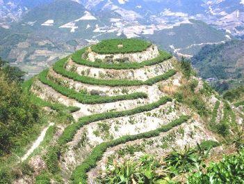 """Tie Guan Yin """"Tee-Berg"""" in Anxi County, Provinz Fujian, China"""
