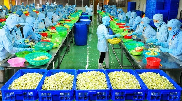 Factory processing fruit for export launched in Ben Tre, Gem, gold firms look to India, Vietcombank hopes to buy HCM City's urban bonds, Vietnam plans sugarcane, rubber intercrops for higher output