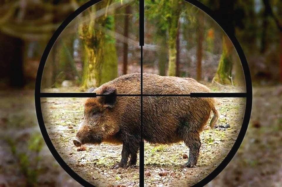 Breve storia della caccia: quando il business vince sulla necessità