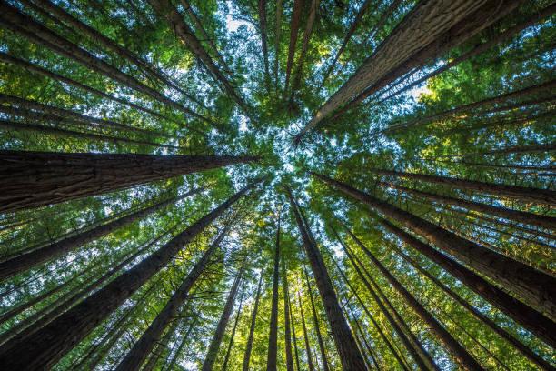 Un nuovo Supereroe dell'ambiente in circolazione: il Garante del Verde