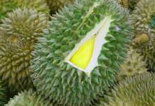 perkebunan durian montong