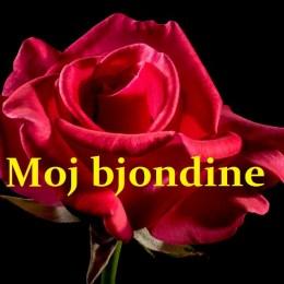 TnT - Bjondina Tekste kengesh shqip, Albanian Lyric 1
