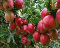 Perfitimet qe keni nga konsumimi i molles pas buke.Molla te ruan nga dehidratimi.