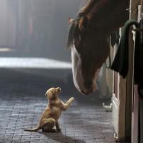Kafshet qe na bejne mire per shendetin mendor. Psikologji.