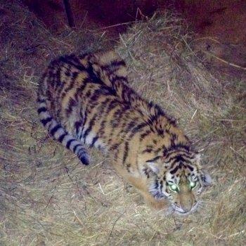 центр тигр официальный сайт