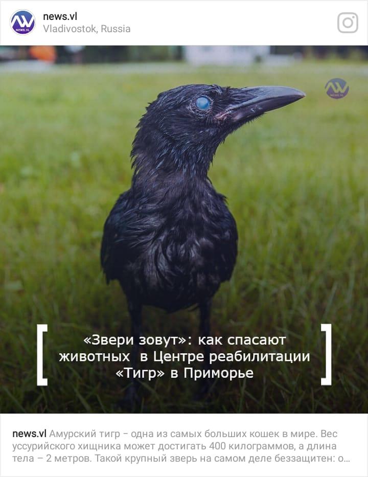 необычная ворона