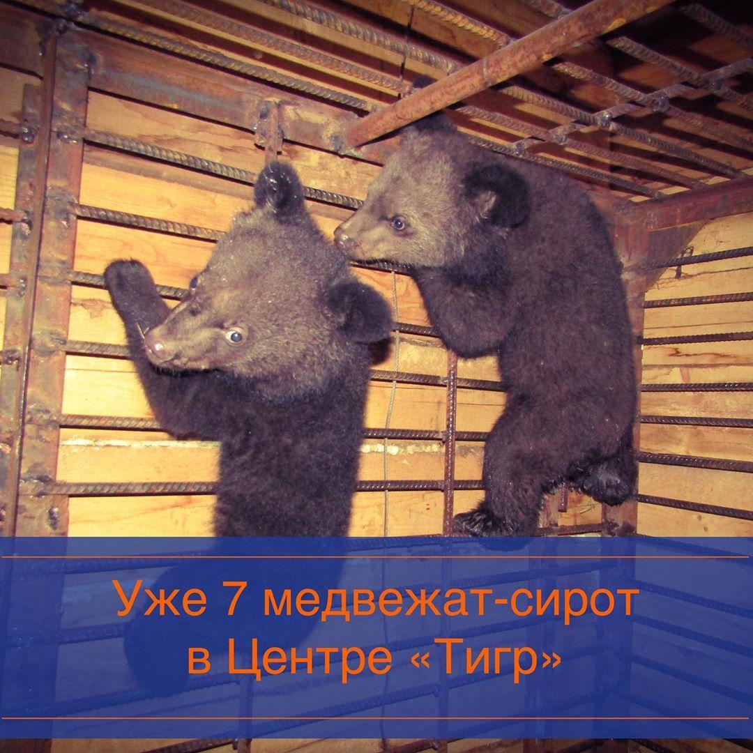 медвежата сироты