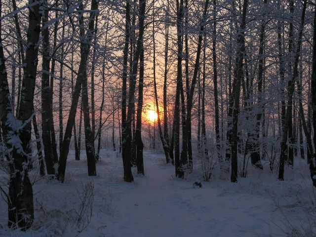 Winter sunset in the woods