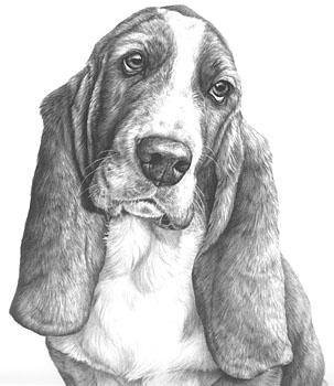 Desenhando Pelos De Animais Dicas De Mj Sibley A Expressao Da Arte