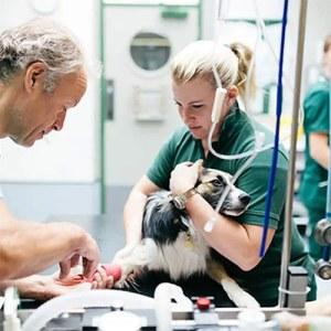 Veteriner Ecza Deposu ve Klinikleri
