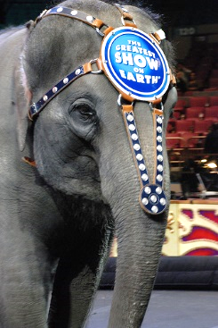 Don't Make Friends with an Elephant Trainer… – Sicamous