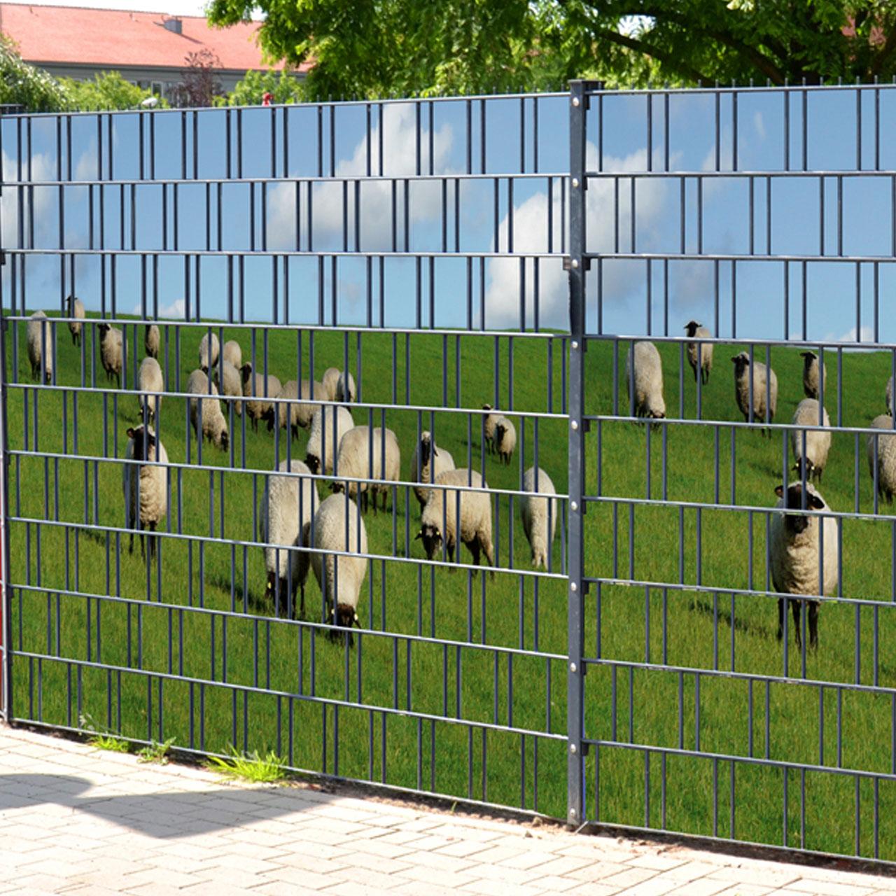Sichtschutzstreifen Bedruckt Motiv Schafe Am Deich
