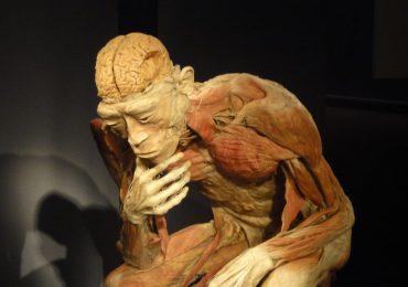 L'arte del corpo umano