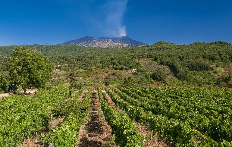 Sull'Etna ditta vinicola evade 220.000 euro